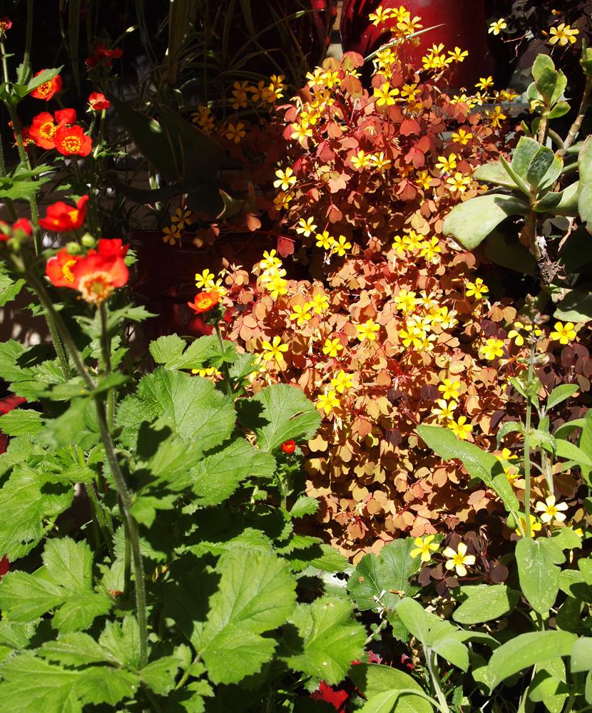 tranquility marco marchesini good garden design